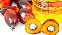 5 motivi per evitare e odiare Olio di Palma e prodotti che ne fanno uso