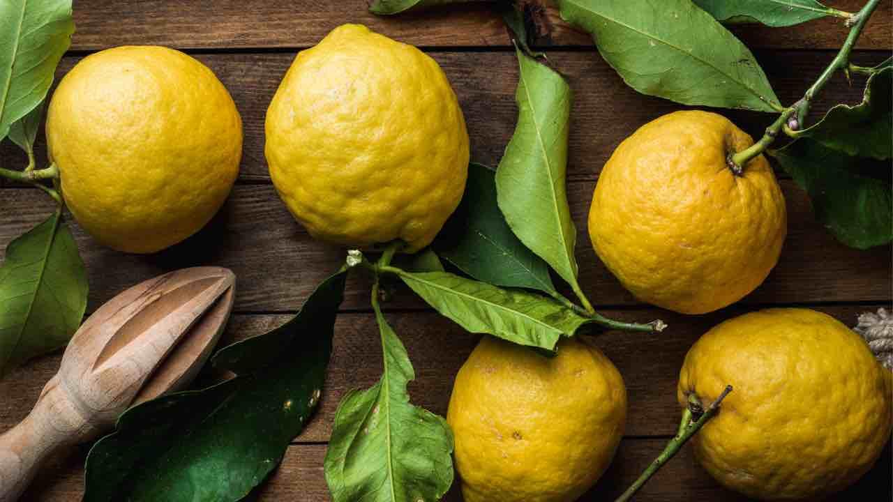 foglie di limone