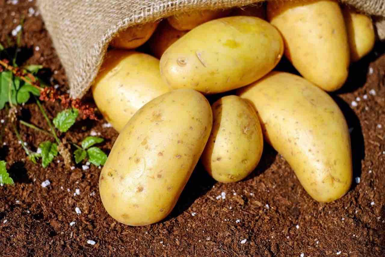 bucce di patate